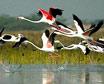 Gondal Birds