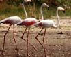 Little Rann of Kutch Wildlife Sanctuary