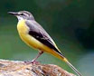 Bird Watching tour at Himachal