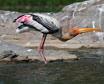 Vythiri birds