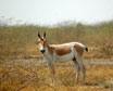 Kutch Wildlife Sanctuary